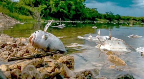 """Siembra de palma africana en Guatemala causa """"un desastre ecológico"""""""