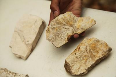 """Inicia investigación paleontológica en sitio """"La Gallina"""" en San Miguel"""