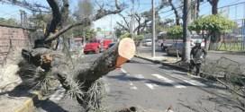 Fuertes vientos causan cuatro muertes en Centroamérica