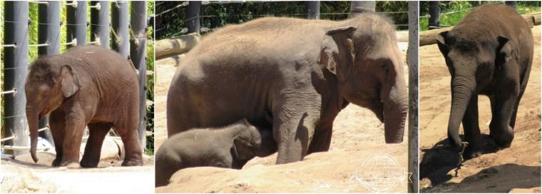 Taronga Zoo di Sydney