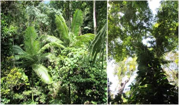 Visitare la Daintree Rainforest