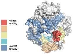 XNA: cientistas criam DNA sintético que evolui
