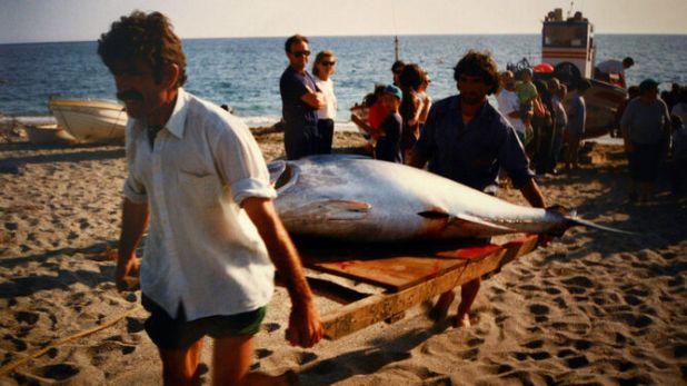 Pescadores portando atún rojo hace 10 años