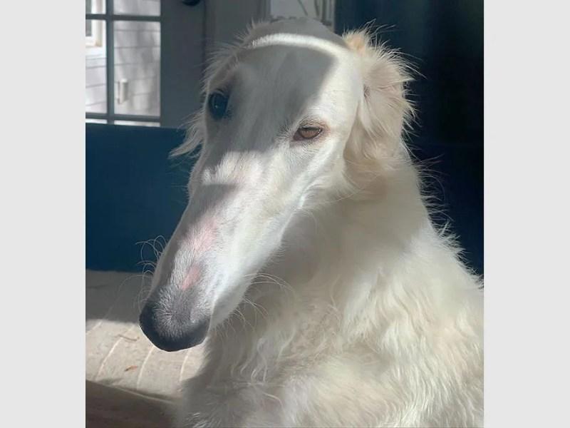 El perro con el hocico más largo del mundo es furor en las redes -