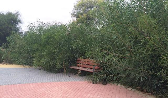 Parque Ilo Ilo