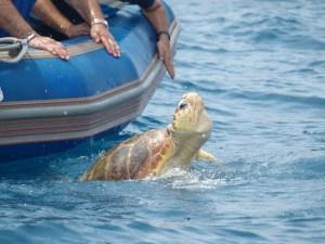 'Habanera' vuelve a mar abierto