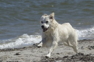 Torrevieja modifica su ordenanza de playas para permitir el baño de perros