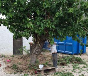 Una vecina de Dolores dona un importante número de árboles al municipio