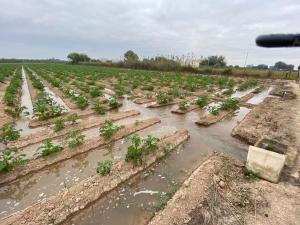 La Ruta del Agua en Almoradí: una puesta en valor del regadío tradicional