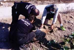 Rescatan una hembra de gamo que tras caer en un azarbe de San Fulgencio