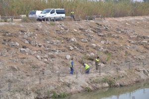 La CHS elimina el cañaveral en el cauce del río Segura en Rojales para mejorar el desagüe en caso de grandes avenidas