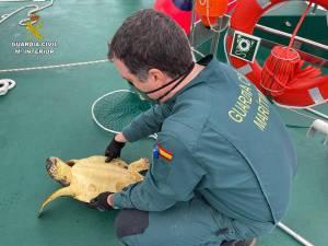 La Guardia Civil rescata una Tortuga Boba en el Pilar de la Horadada