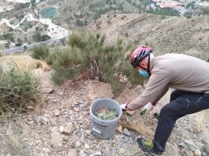 Continúan los trabajos de retirada del cactus de Arizona en la sierra de Orihuela