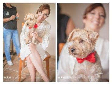 perros en boda