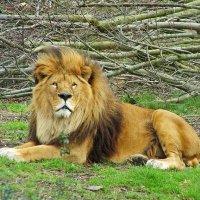 La ONU combatirá la caza furtiva de especies amenazadas