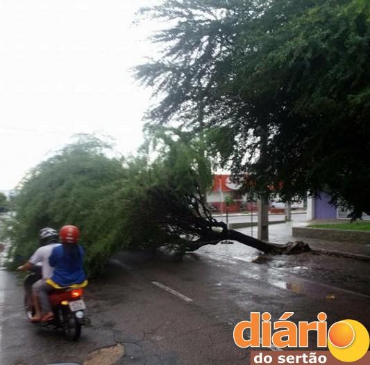 A árvore caiu no Centro da cidade e as galhas ficaram no meio da rua