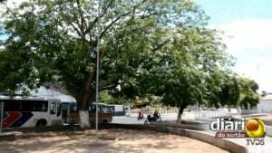 Uma das cajazeiras plantadas por Constantino ainda se destaca no meio da praça