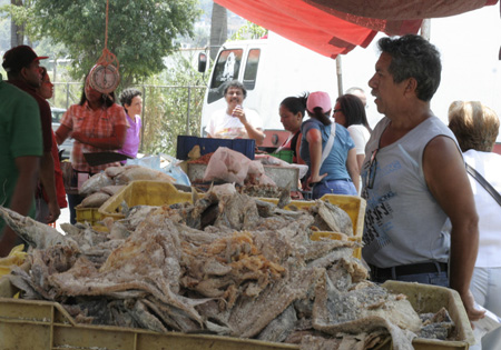 Más de 70 toneladas en 40 variedades de pescado venderán en la Semana Mayor