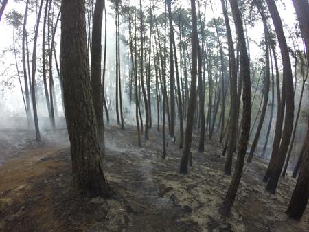 Hasta este viernes las llamas habían arrasado con 400 hectáreas de bosque.