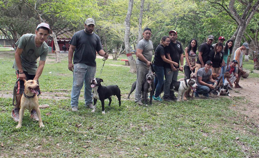 25 perros son entrenados cada fin de semana en el parque Los Nuevos Teques