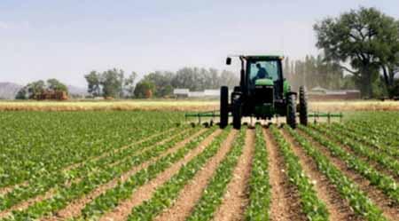 Los cultivos de OGM no representan mayores riesgos para el medio ambiente y la salud que los convencionales.