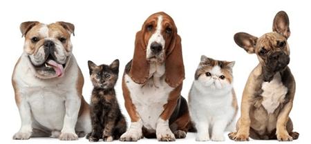 """""""Pet Valet"""" una app que te ayudará a cuidar a tu mascota"""