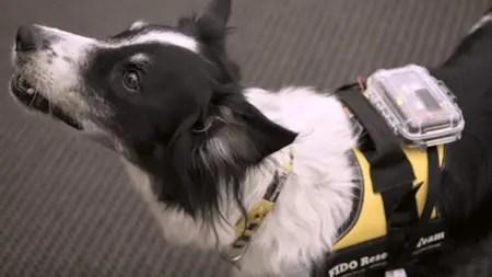 Desarrollaron un chaleco para perros que mediante sensores puede ayudarnos a comunicarnos con las mascotas