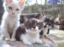 CCZ realiza feira de adoção de cães e gatos em Diadema