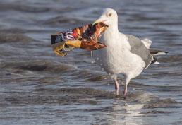 Indústria do plástico anuncia investimento de US$ 1 bi para combater poluição nos oceanos