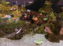 Sabina ganha aquário de recife de corais no mês de aniversário