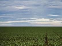 Anvisa aprova marco regulatório dos agrotóxicos