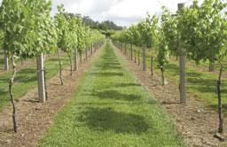 São Paulo terá no próximo dia 23 evento sobre vinhos verdes
