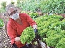 Hortas comunitárias em Diadema promovem o consumo de orgânicos