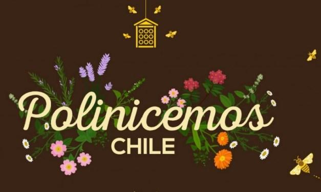Polinicemos Chile! La iniciativa para proteger a las abejas