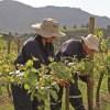 Viña Montes recibe importante certificación Fair for Life