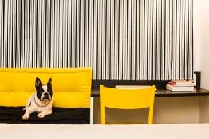 Cachorro Ibis