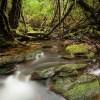 Natura mitiga sus emisiones en Chile y protege la Selva Valdiviana