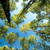 La gran empresa forestal y su exitosa apuesta por el bosque nativo