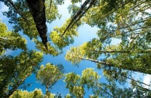 bosque_renoval 1