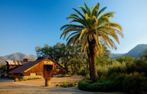 McNab Ranch, Bonterra Organic Vineyards, Mendocino County, California