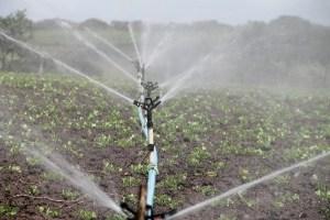 Uso eficiente del agua: el factor clave para combatir la desertificación en la agroindustria