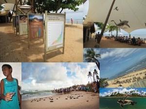 Turismo Sustentable: Proyecto Tamar, Protectores de Tortugas. Por Carla Silva P. @csilvapalma