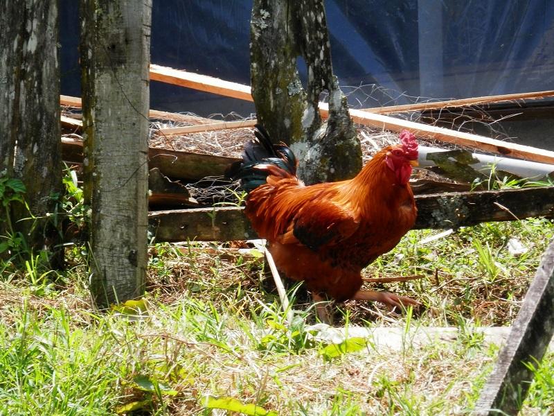 Primeros avances de Sodexo en su compromiso por abastecerse de Huevos de Gallinas Libres