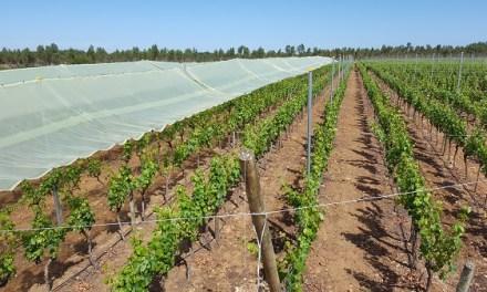 Techado de viñedos: el innovador proyecto de sustentabilidad de Viña Montes