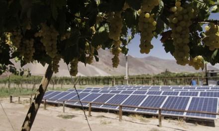 Energía solar en el mundo agrícola: Creando exportaciones sustentables y rentabilidad empresarial