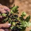 Instalan en La Araucanía el primer centro tecnológico para potenciar industria de alimentos naturales y únicos del sur de Chile