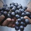 Fiesta de la Vendimia: Descubre los secreto del sabor