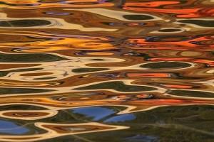 """Exposición """"La Ecología de la Mirada"""" invita a valorar la belleza de la naturaleza que existe en el entorno urbano"""