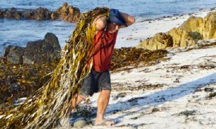 """Pesca Artesanal exige políticas de fomento en """"Mes del Mar"""""""