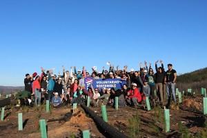 Fundación Reforestemos, junto a LATAM Airlines, realizó primer voluntariado sostenible, logrando reforestar 5.000 árboles nativos